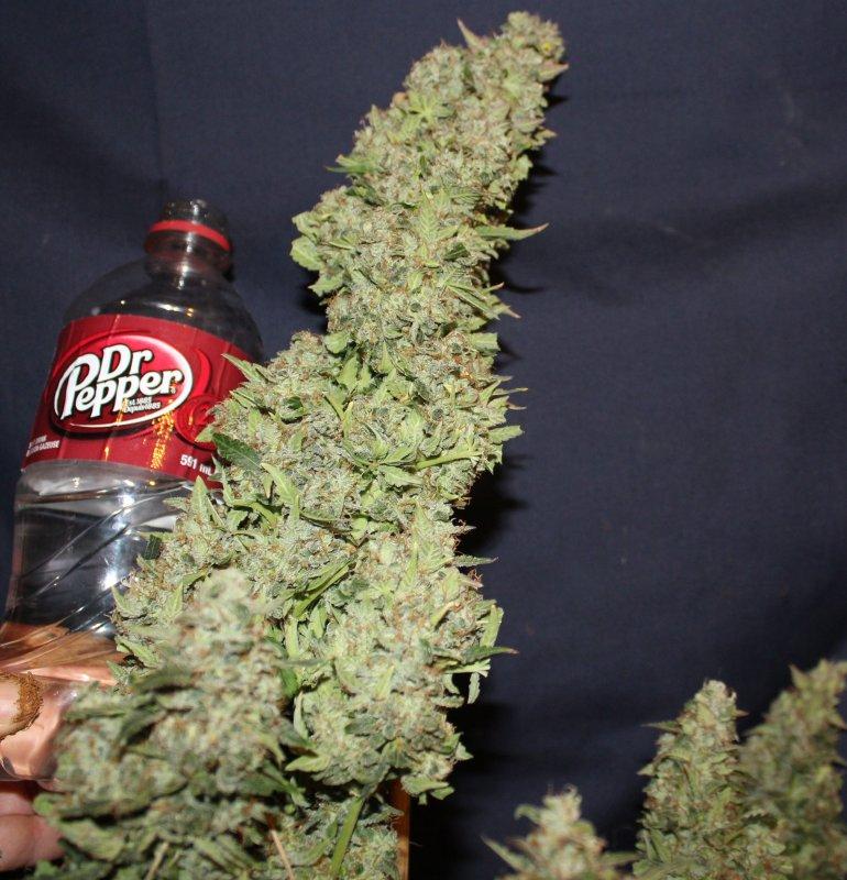 cannabis market, Weedstockers