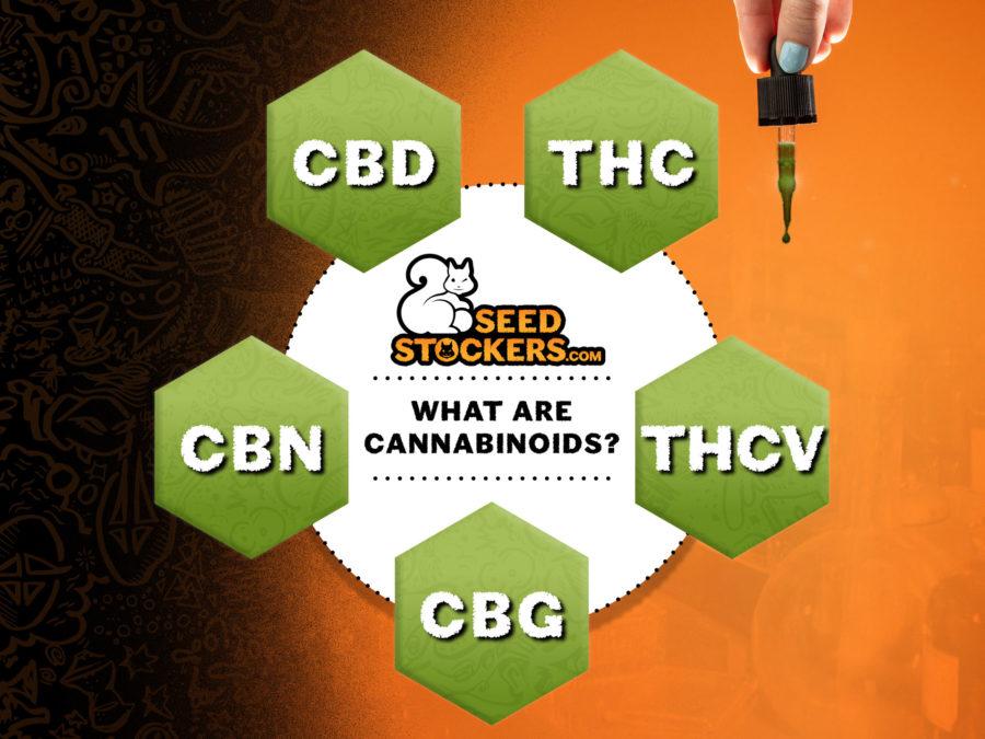 cannabinoides, Weedstockers