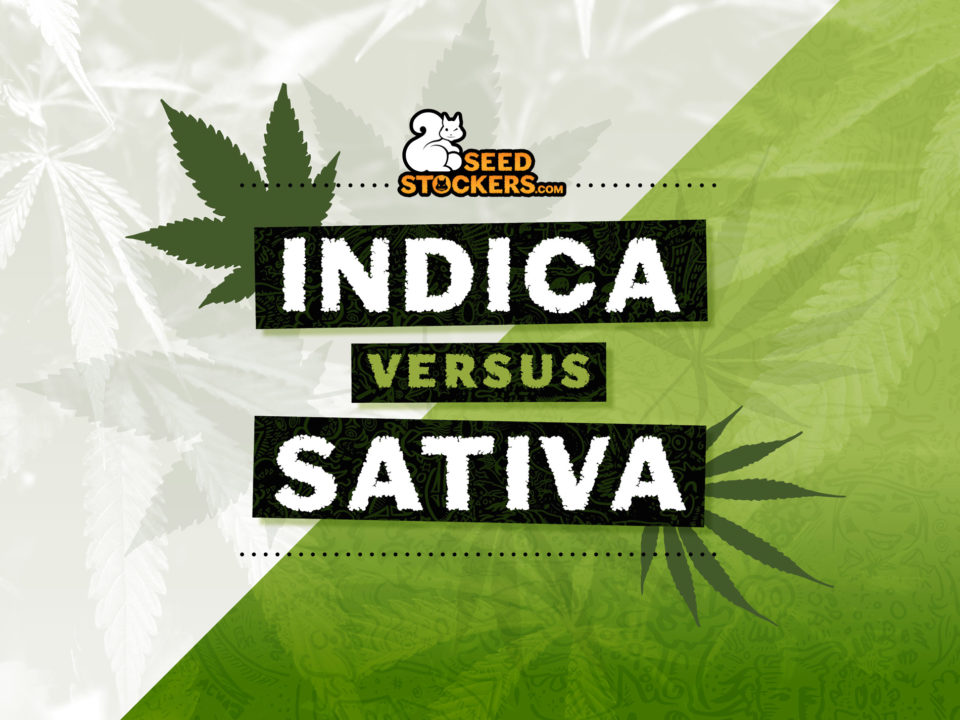 seedstockers indica sativa difference