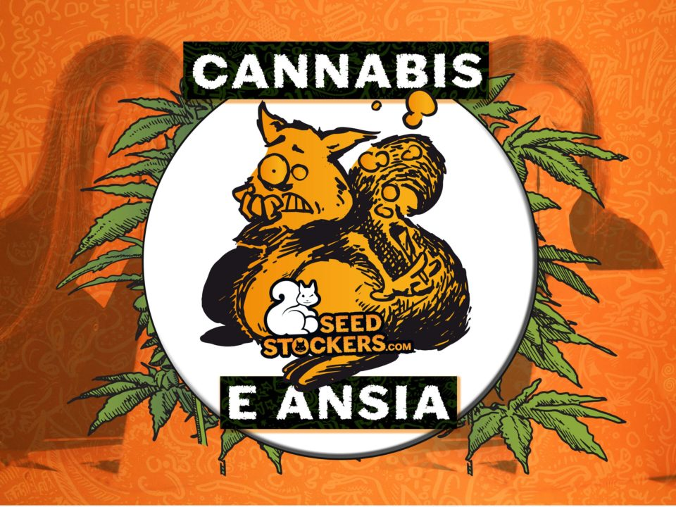 cannabis ansia