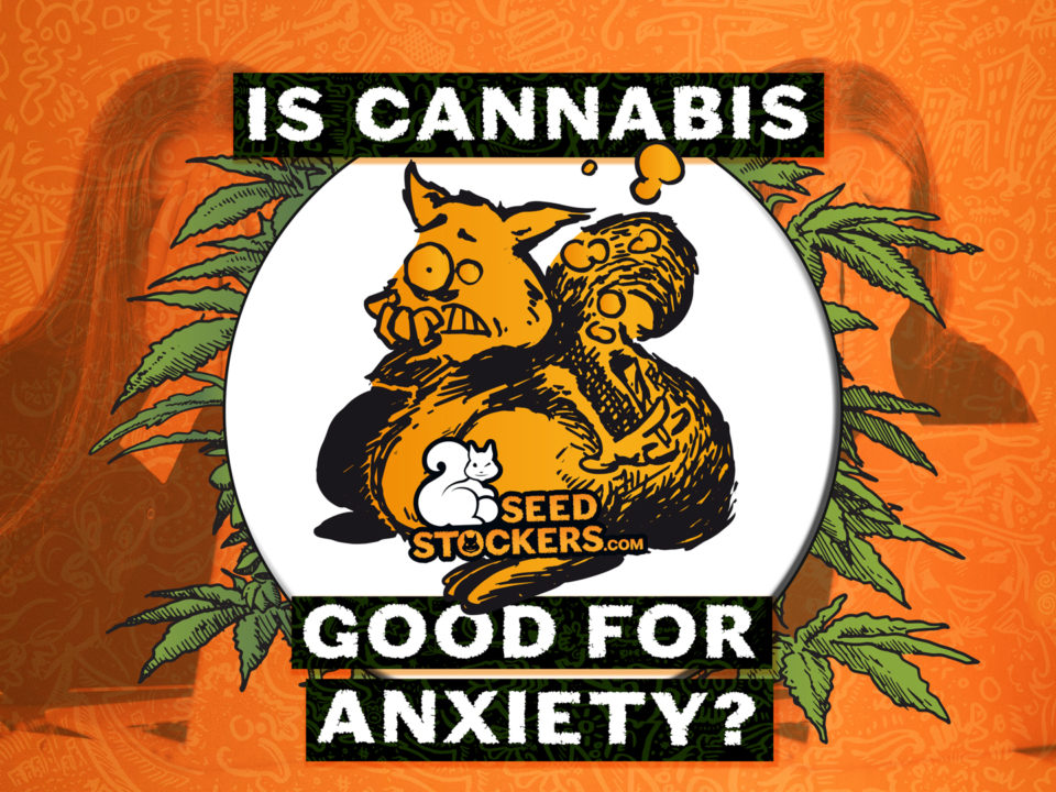 anxiety, Weedstockers