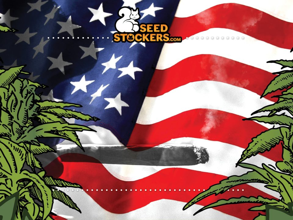 house of representatives, Weedstockers