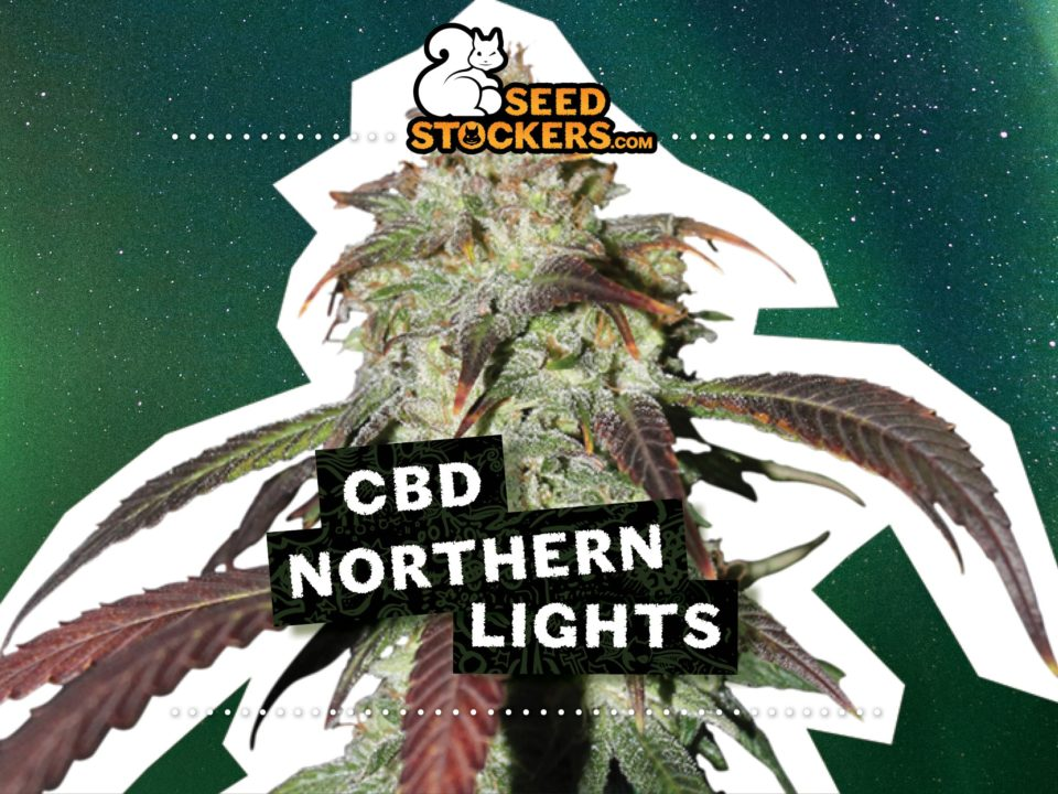 CBD Northern Lights