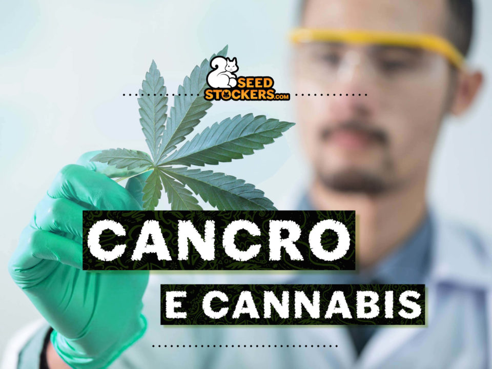 cancro, Weedstockers