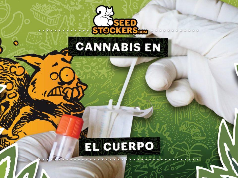 cannabis en el cuerpo