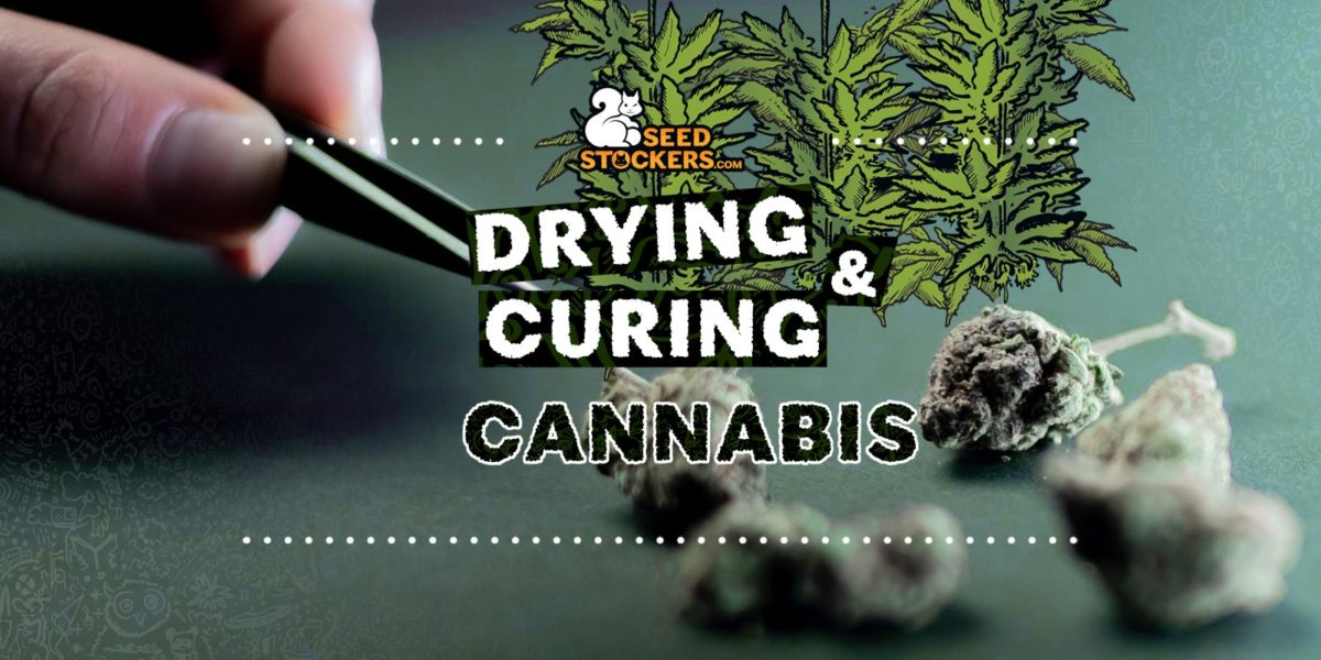 drying and curing cannabis, Weedstockers