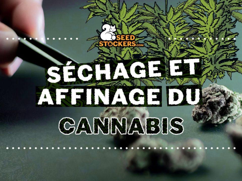 sechage et affinage du cannabis