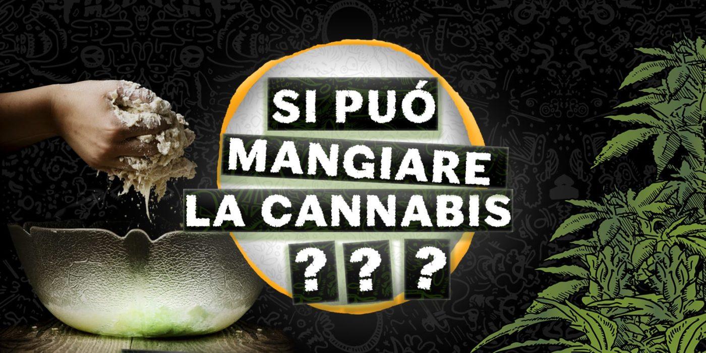 si puo mangiare la cannabis