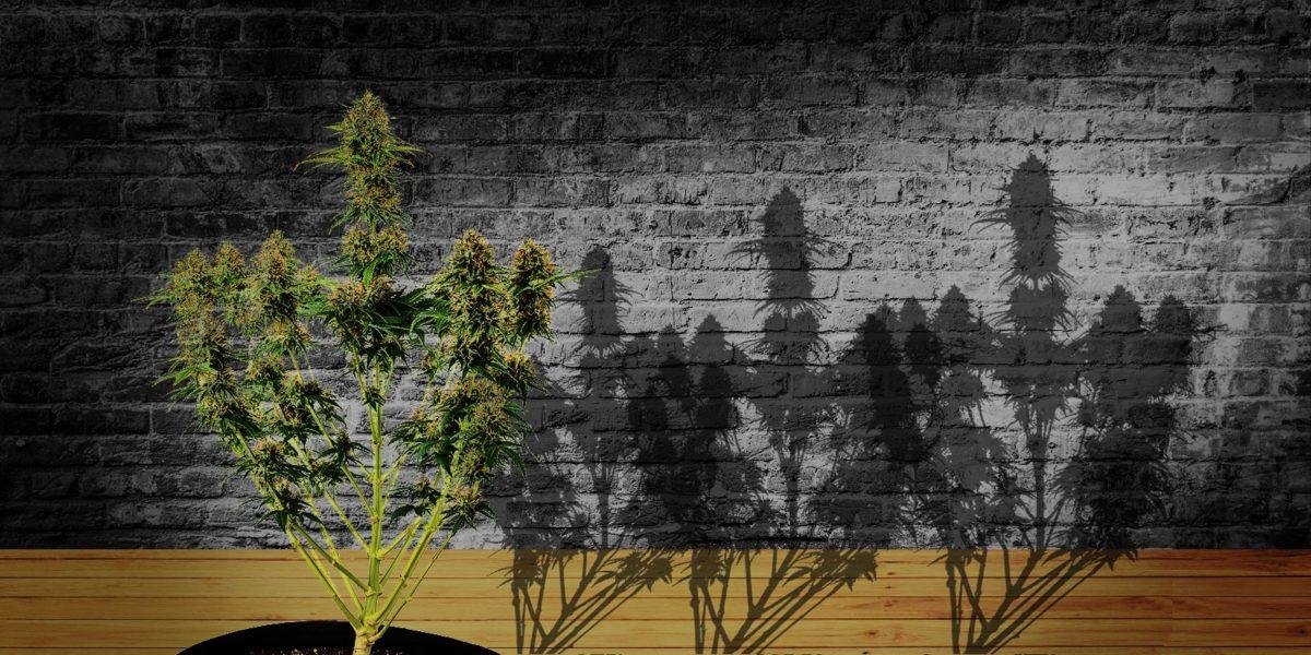 cuttings, Weedstockers